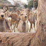 鹿を保護する奈良公園の隠れスポット!その名は鹿苑(ろくえん)