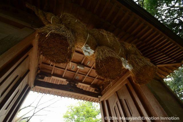 長浜神社注連縄