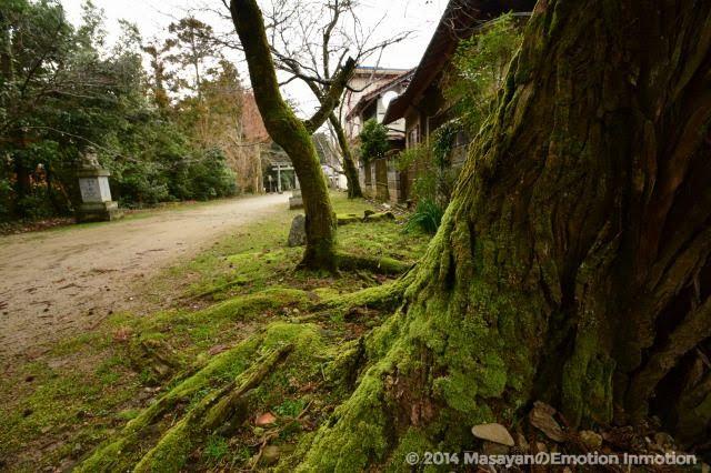 須佐神社・木の苔
