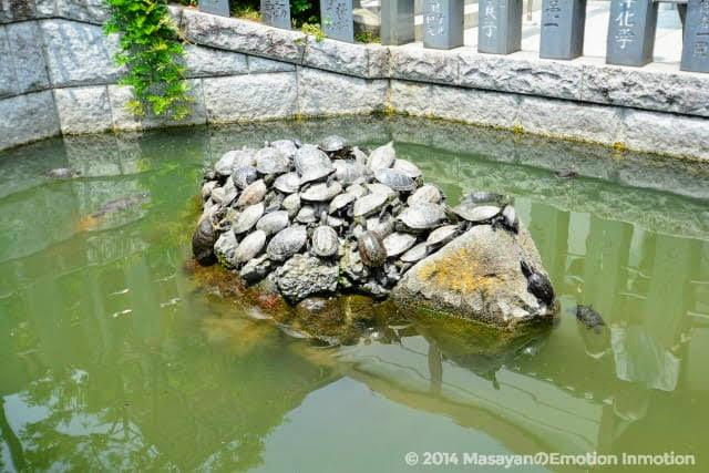 成田山新勝寺の亀