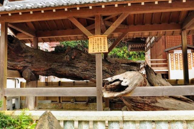 須磨寺/義経腰掛の松