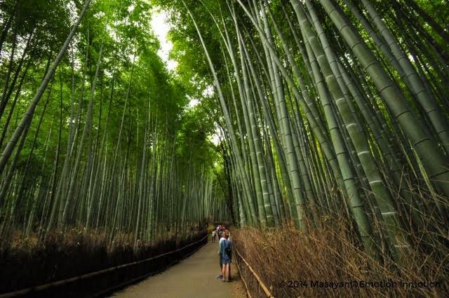 京都/嵐山/竹林