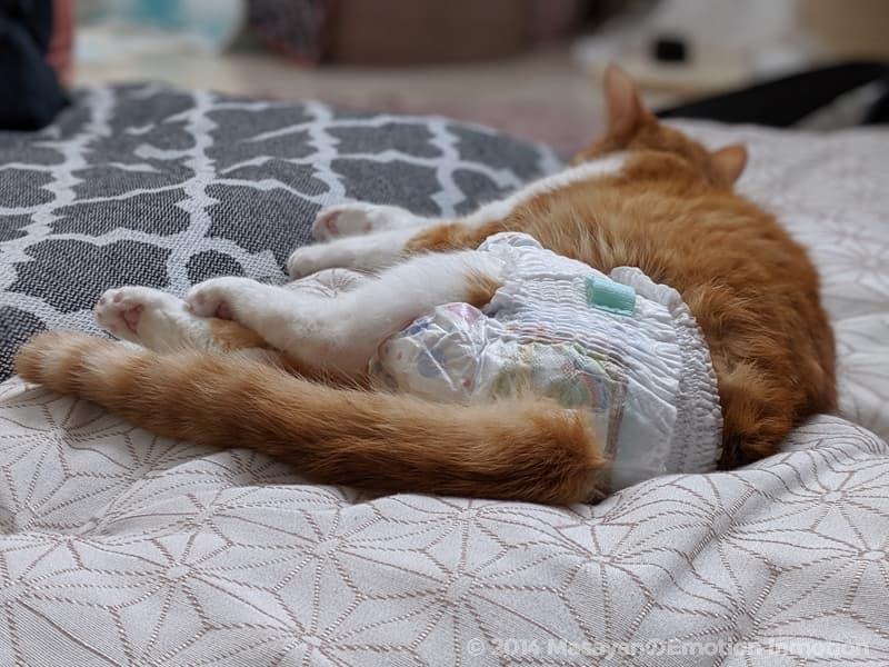 猫とオムツ