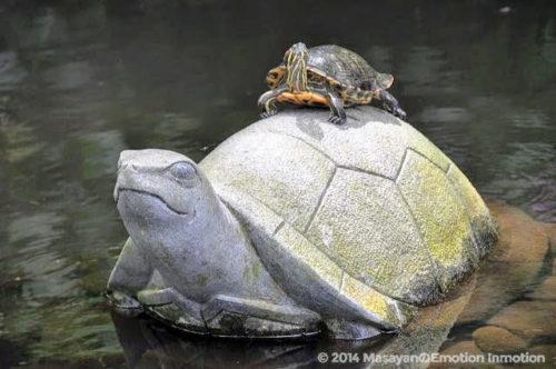 グラバー園の亀の池の亀